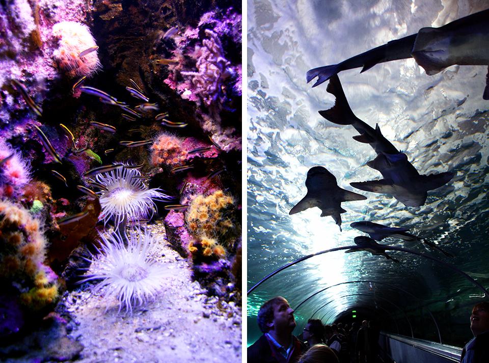 aquarium-sydney-australie-01