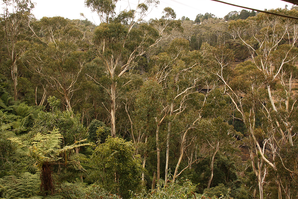 blue-mountains-australie-04