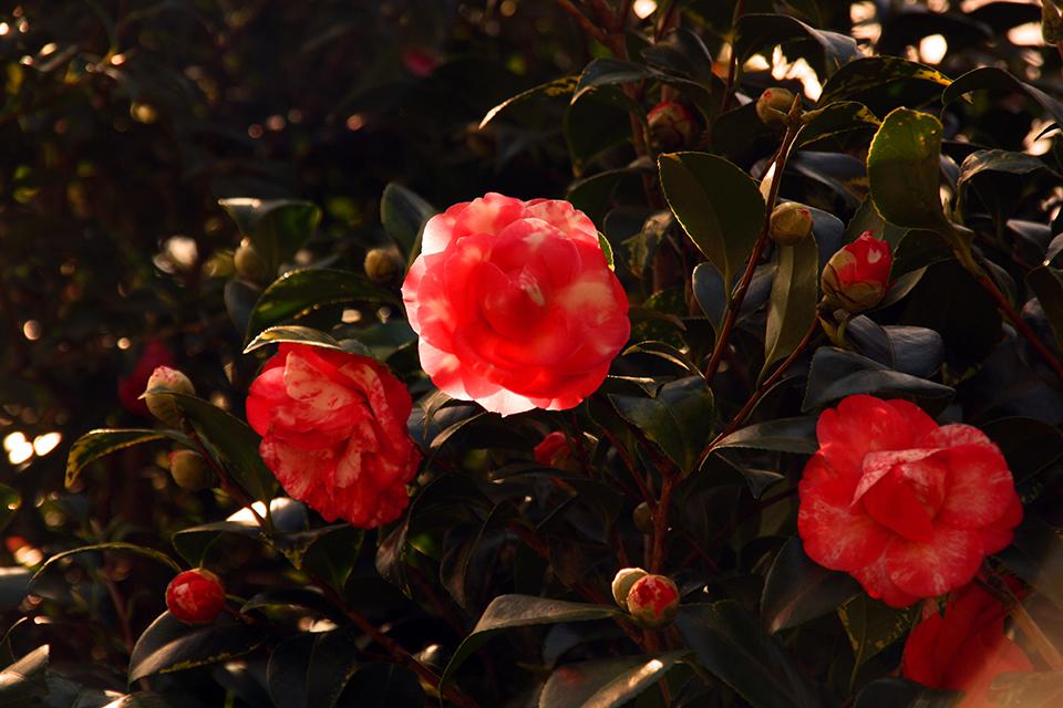 botanic-garden-sydney-australie-04