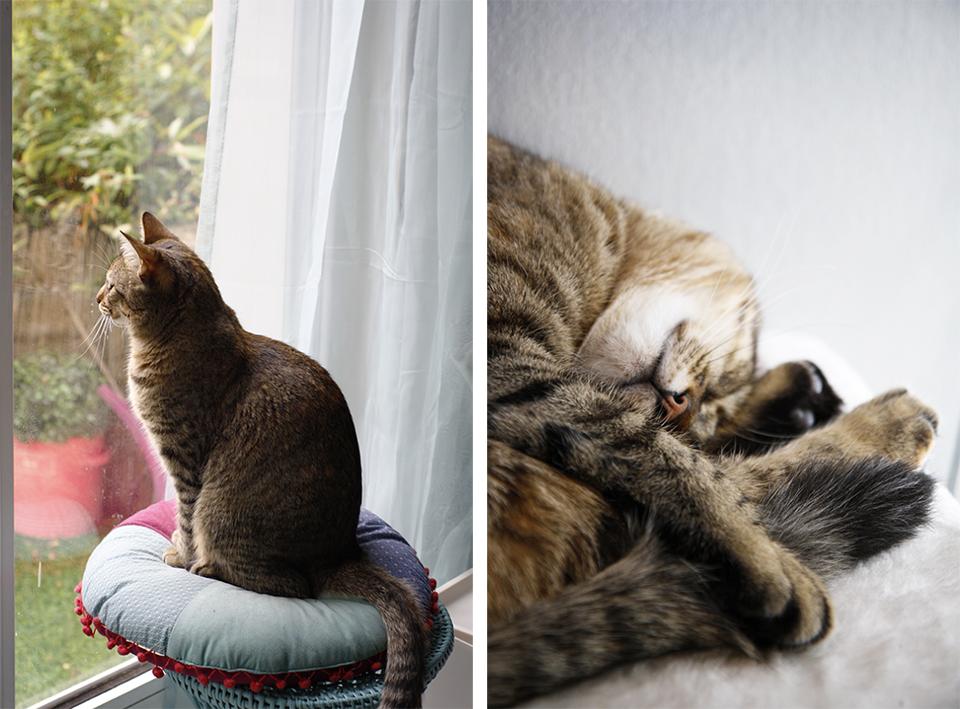 avoir un chat mode d'emploi