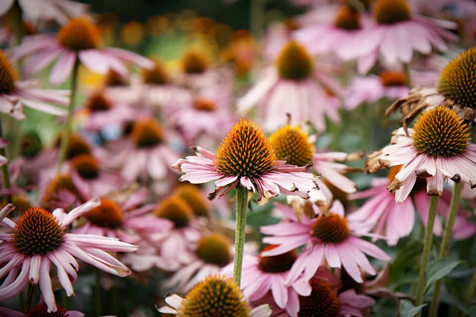 fleurs-kew-gardens-londres-01