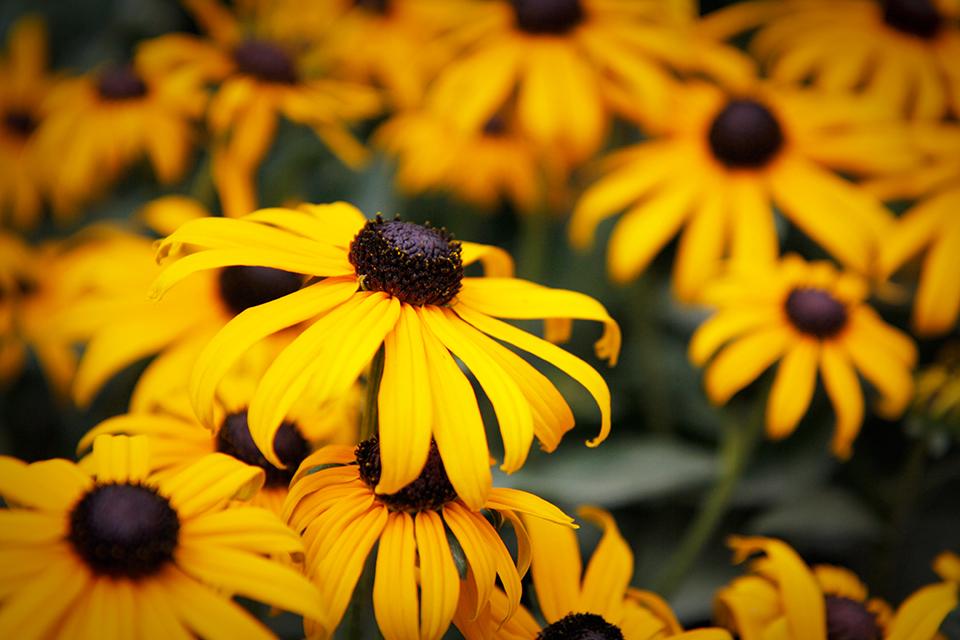 fleurs-kew-gardens-londres-03