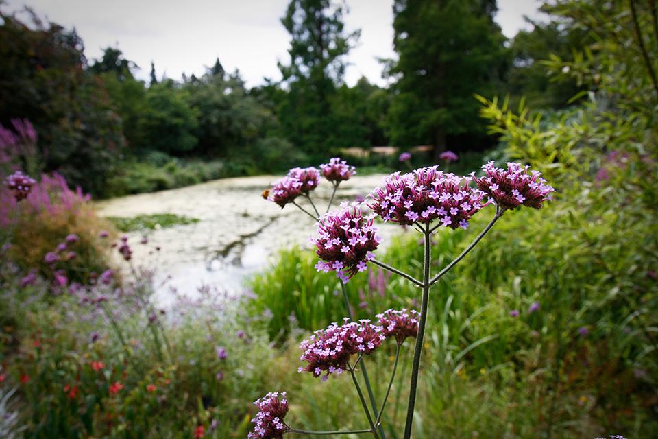 fleurs-kew-gardens-londres-07
