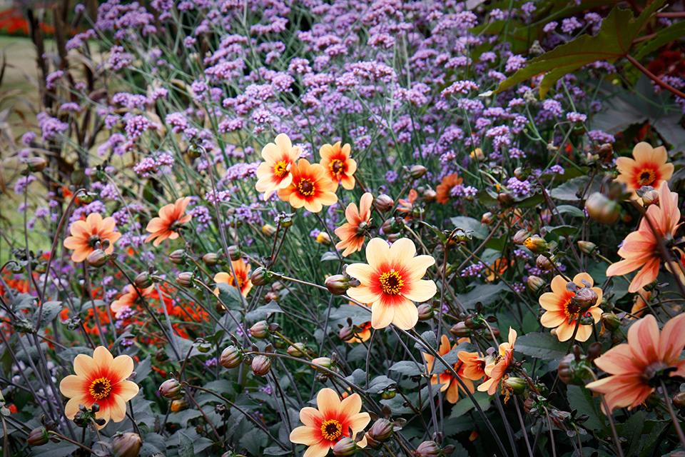 fleurs-kew-gardens-londres-09