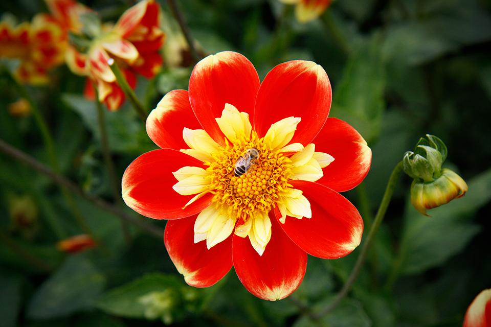 fleurs-kew-gardens-londres-11