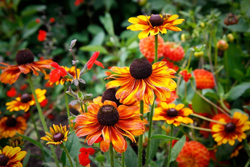 fleurs-kew-gardens-londres-13