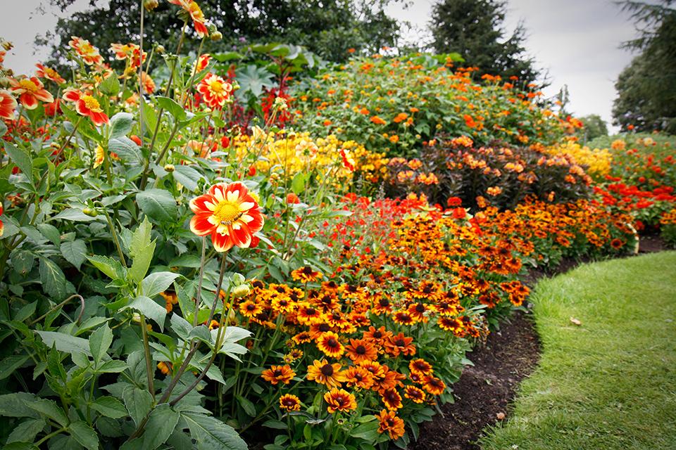 fleurs-kew-gardens-londres-14