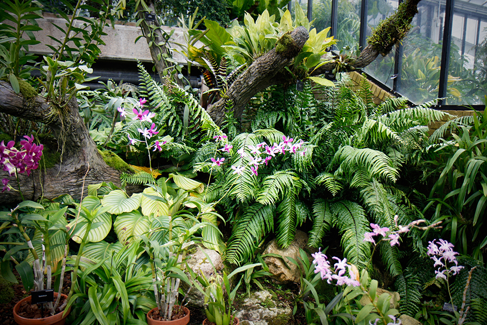 princess-of-wales-conservatory-kew-gardens-londres-23