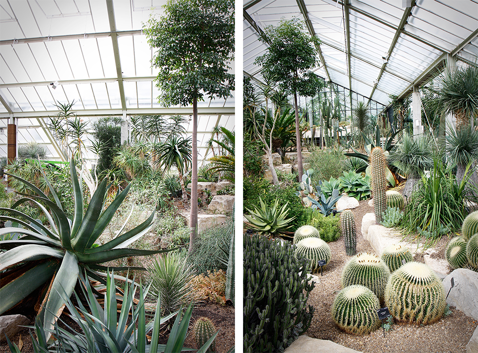 princess-of-wales-conservatory-kew-gardens-londres-33