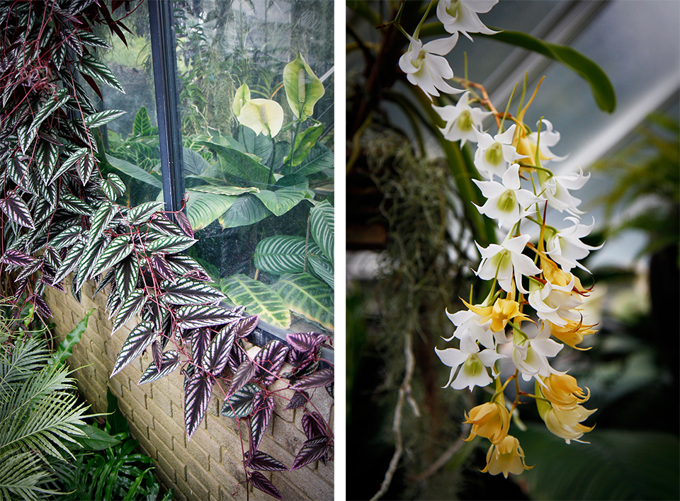 princess-of-wales-conservatory-kew-gardens-londres-35