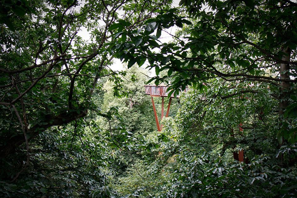 treetop-walkway-kew-gardens-londres-04
