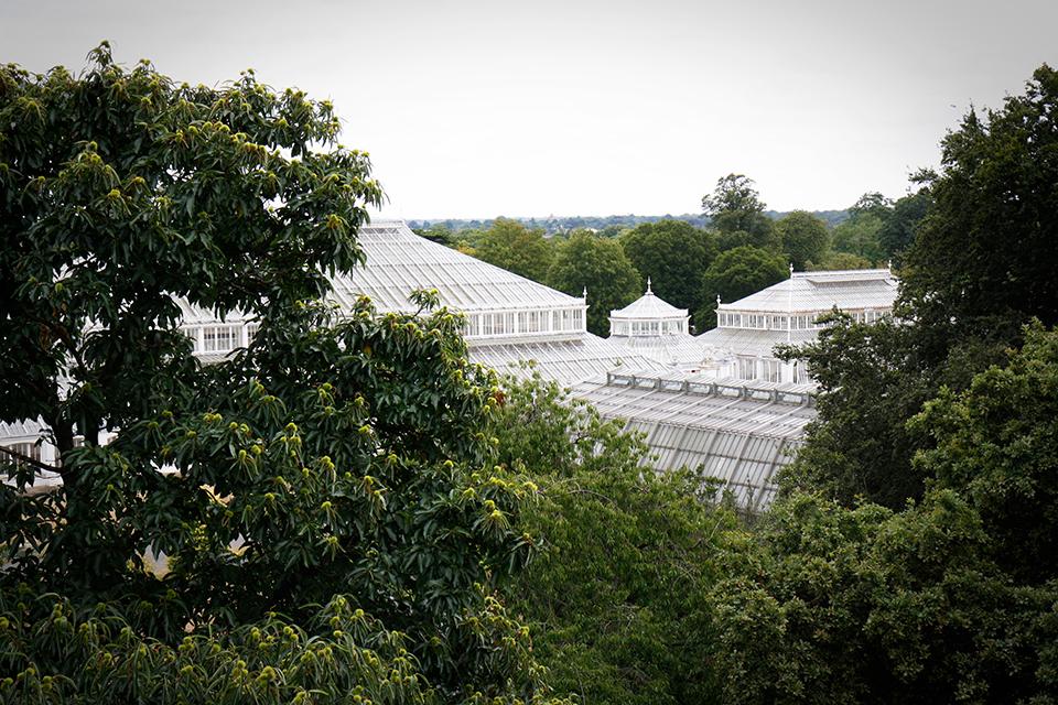 treetop-walkway-kew-gardens-londres-08