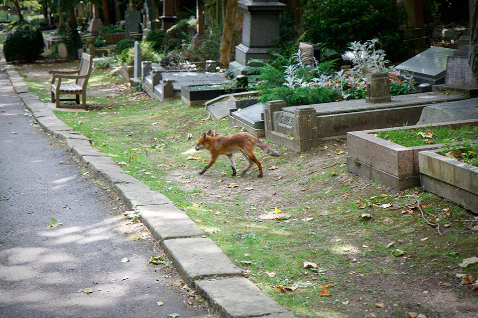 londres-highgate-cemetery-renard-fox-03