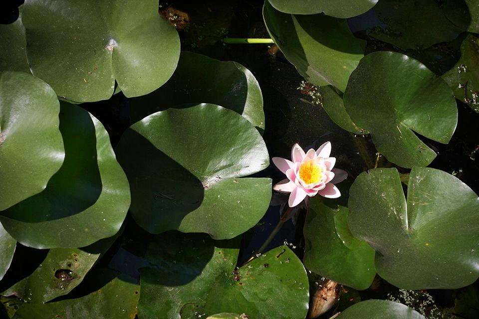lucques-jardin-botanique
