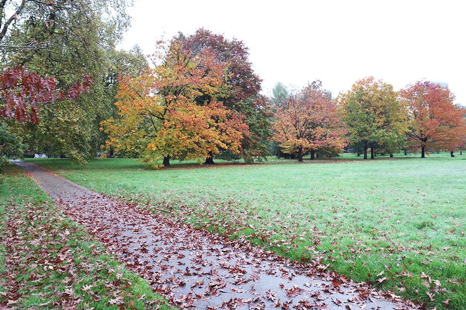londres en automne hyde park
