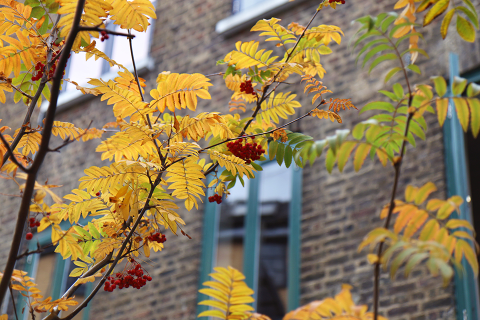 londres-automne-09