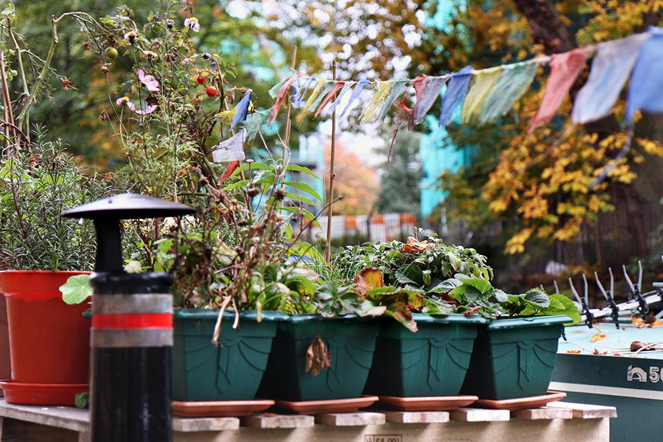 londres-regents-canal-bateau-plantes