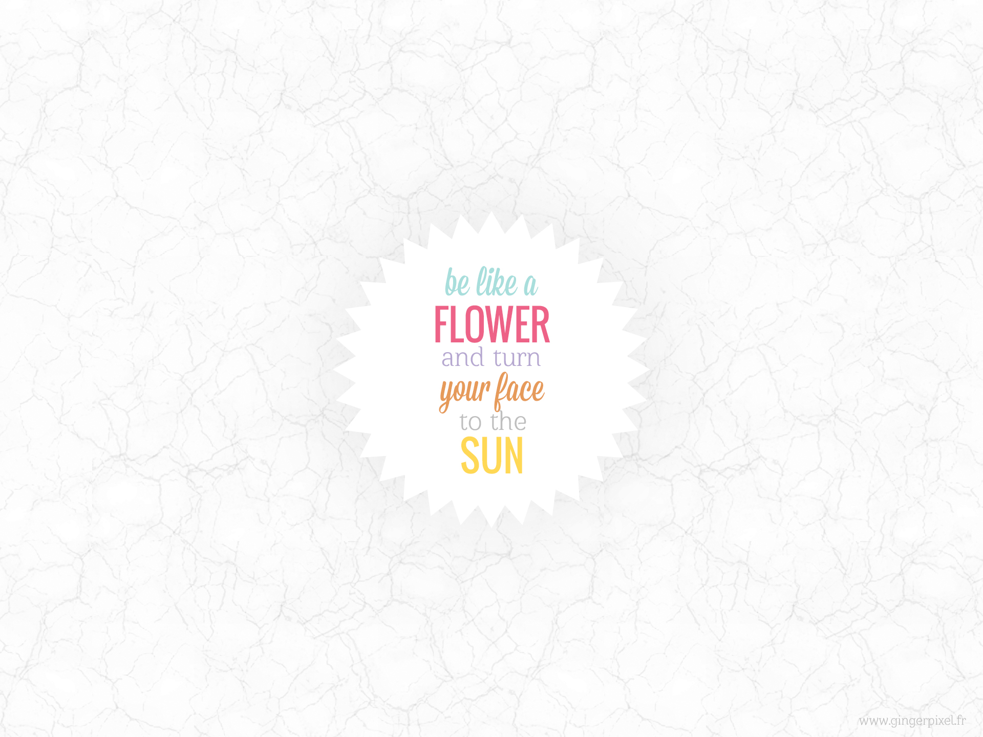 wallpaper-flower-sun-normal