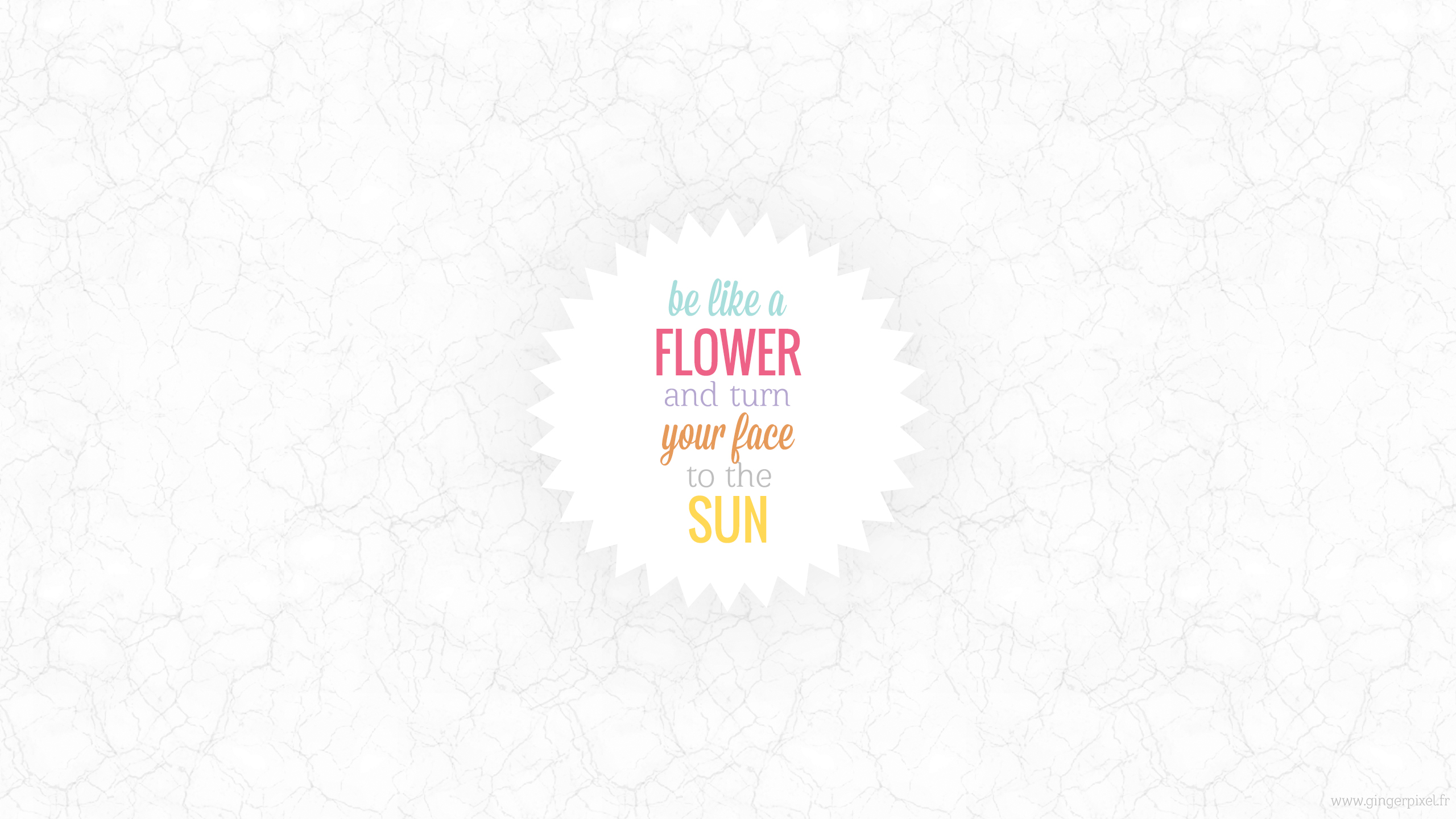 wallpaper-flower-sun-panoramique