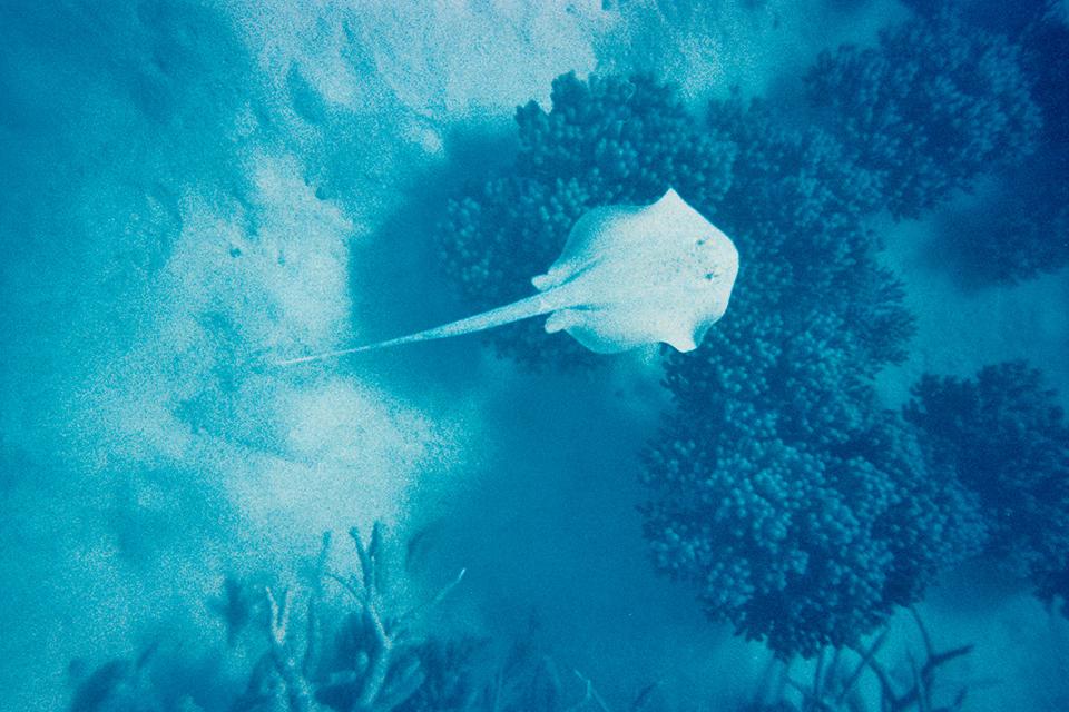 barriere-corail-australie-12