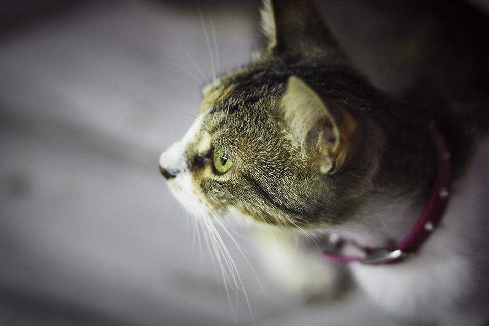 chats-grecs-cyclades-01