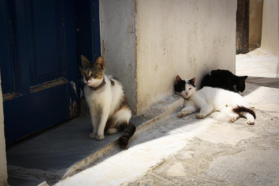 chats-grecs-cyclades-03