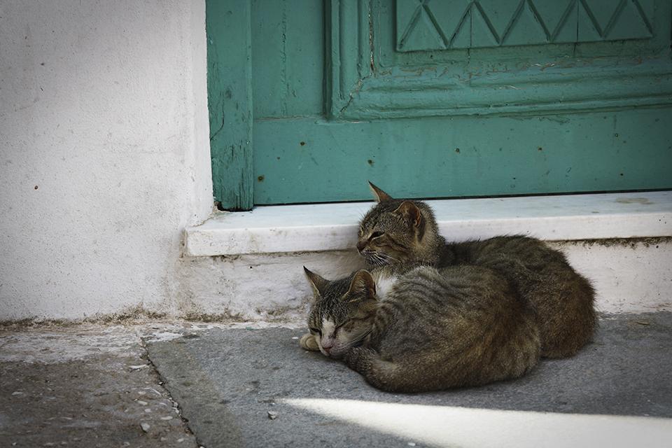 chats-grecs-cyclades-04