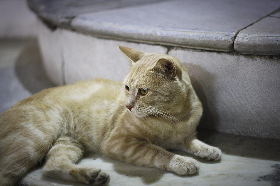 chats-grecs-cyclades-05
