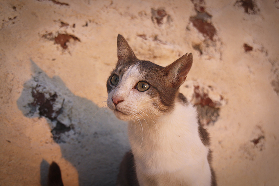 chats-grecs-cyclades-06