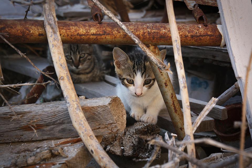chats-grecs-cyclades-09