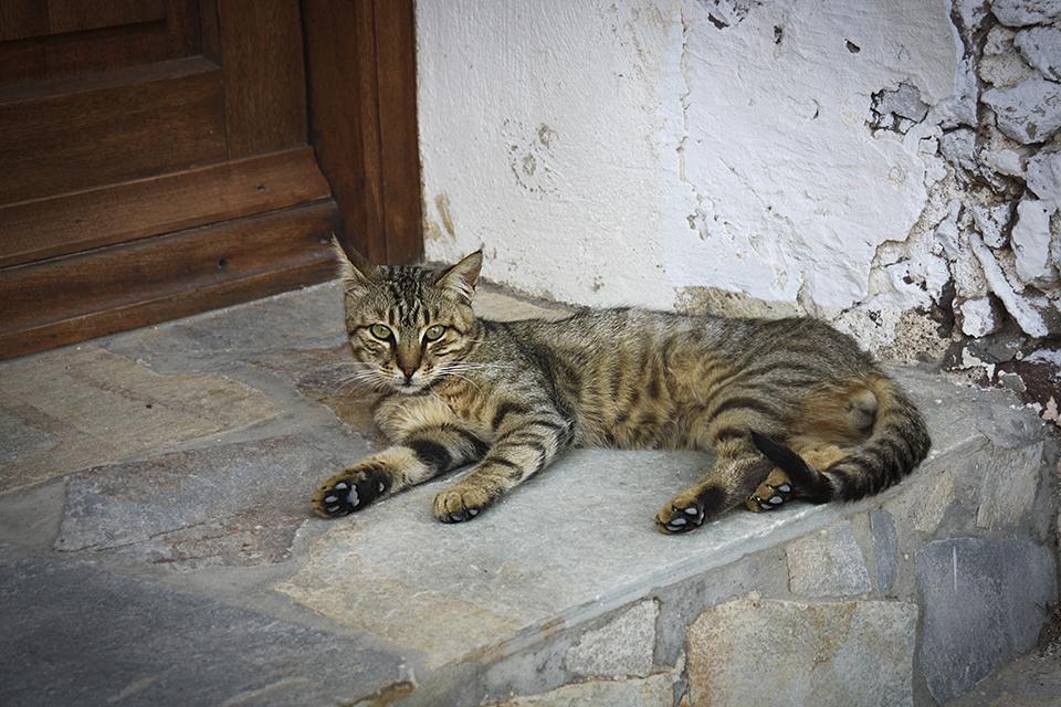 chats-grecs-cyclades-11