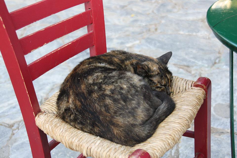 chats-grecs-cyclades-16