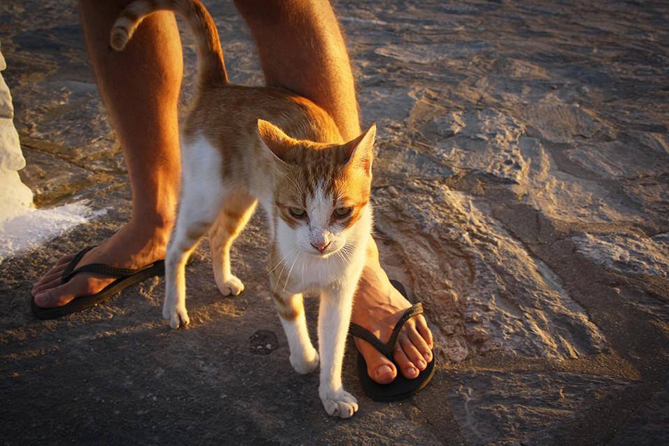 chats-grecs-cyclades-17