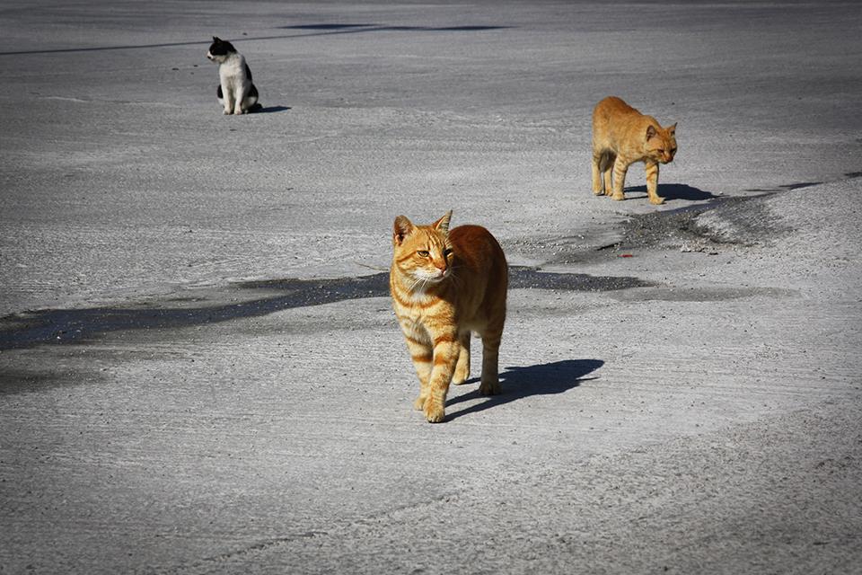 chats-grecs-cyclades-20