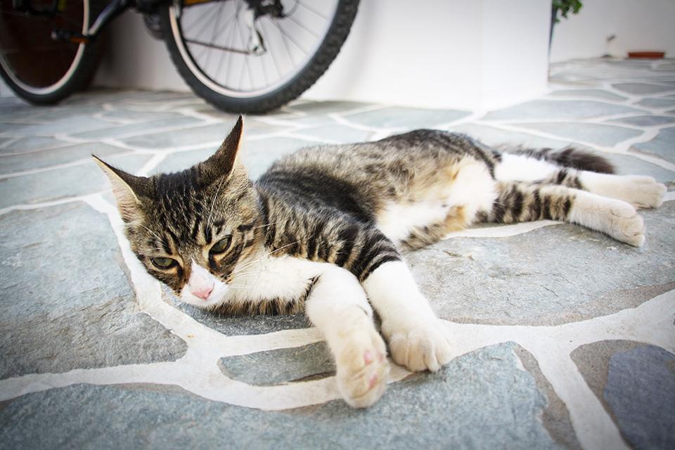 chats-grecs-cyclades-23