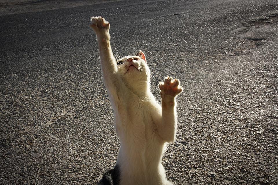 chats-grecs-cyclades-25