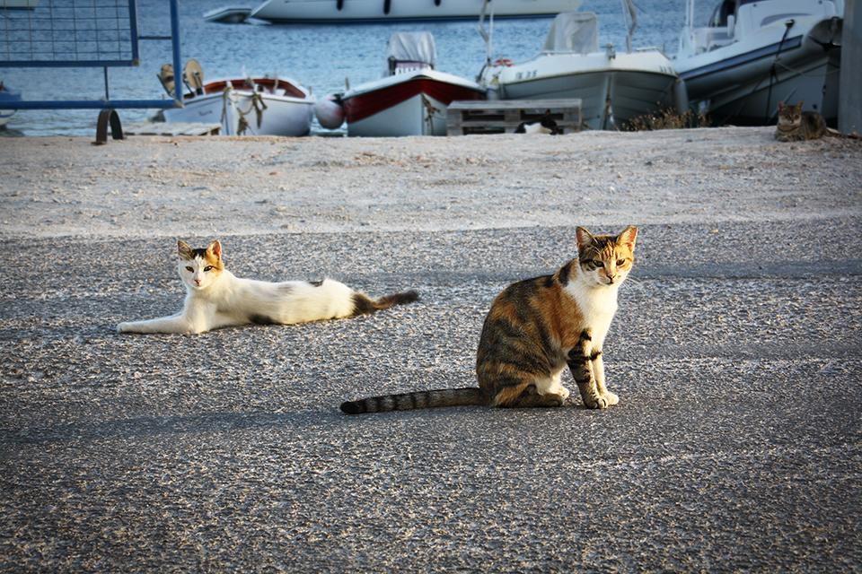 chats-grecs-cyclades-26