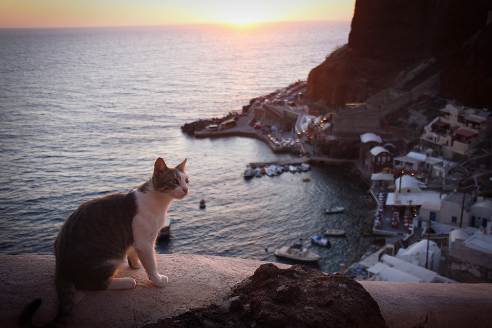 chats-grecs