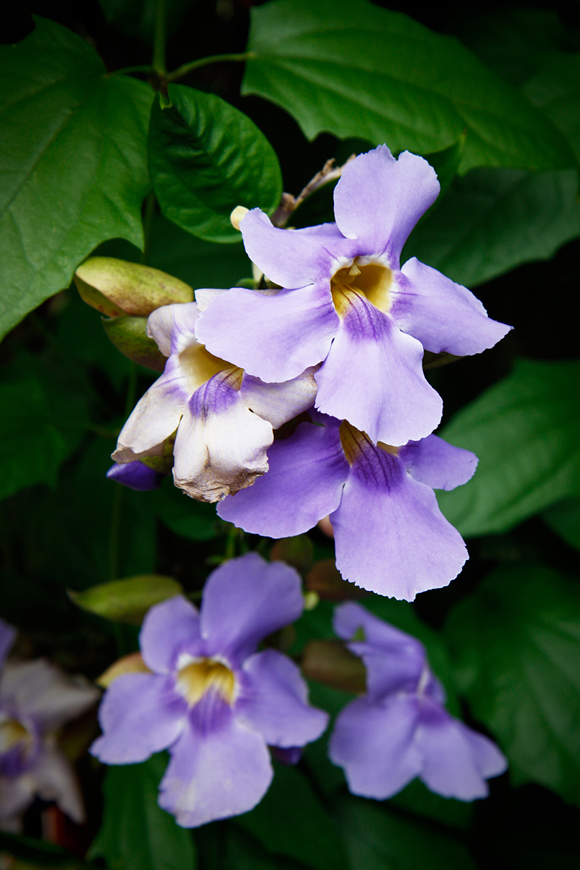 londres-kew-gardens-9763-mod